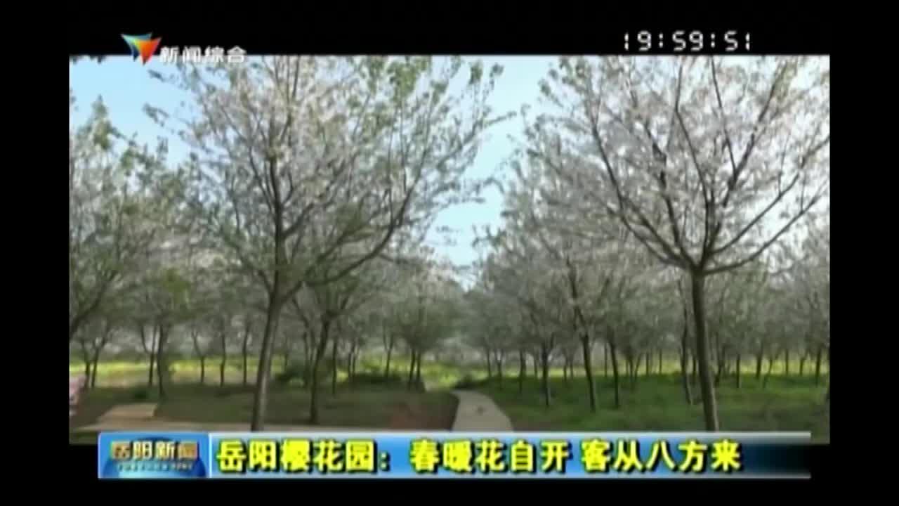 岳阳樱花园:春暖花自开 客从八方来