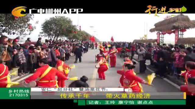 """安仁""""赶分社""""暨油菜花节:传承千年 带火草药经济"""
