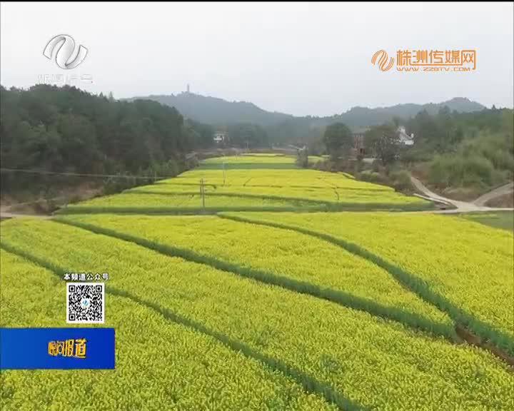 攸县宁家坪镇:2.3万亩油菜花开 带动乡村旅游+产业