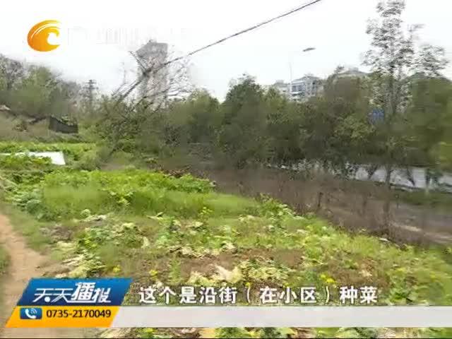 """湘南学院:小区公共用地变""""开心农场"""" 多部门联合整治"""