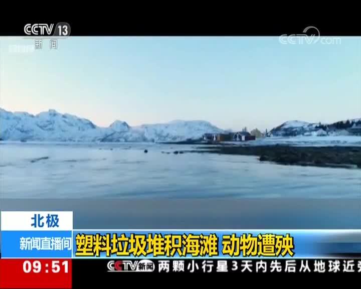 [视频]北极:塑料垃圾堆积海滩 动物遭殃