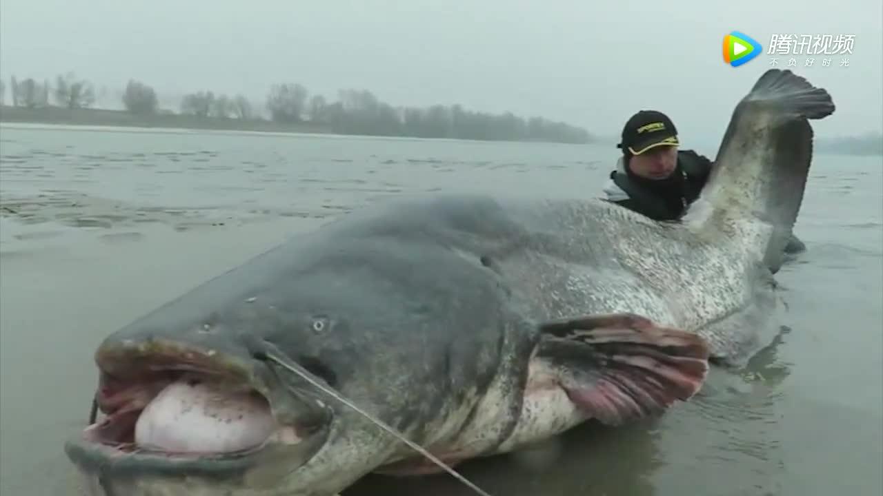 [视频]男子钓260斤大鱼 花45分钟拖其上岸又放生
