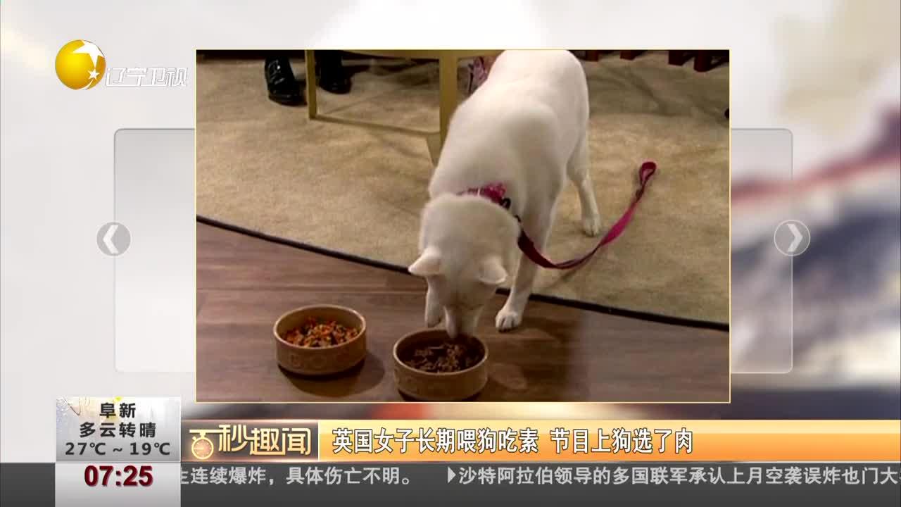 [视频]英国女子长期喂狗吃素 节目上狗果断选了肉