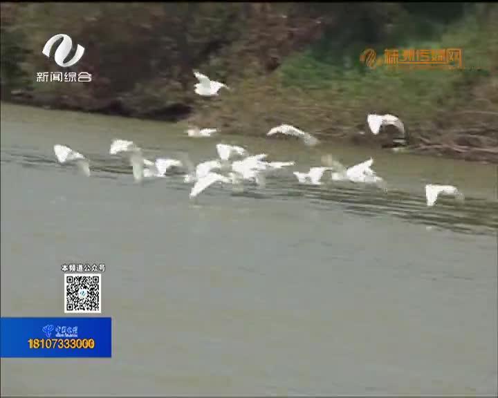 """炎陵:筑牢""""千年鸟道"""" 保护候鸟""""回家路"""""""