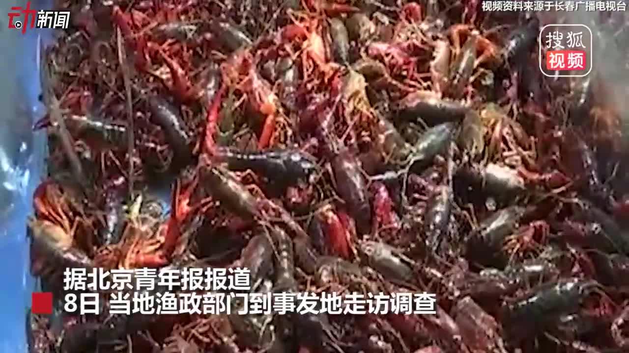 """[视频]长春男子被小龙虾""""托梦""""求解救 买数十箱放生 涉嫌违规"""