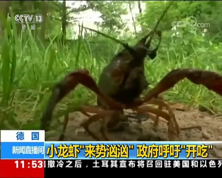 """[视频]德国:小龙虾""""来势汹汹"""" 政府呼吁""""开吃"""""""