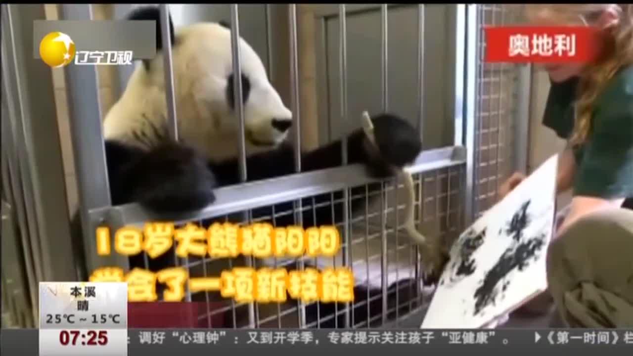 [视频]旅奥大熊猫挥笔作水墨画 每幅售价近4千元