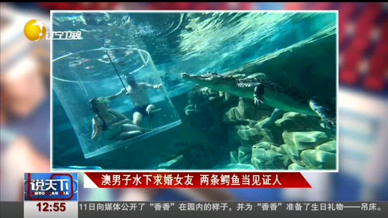 [视频]澳男子水下求婚女友 两条鳄鱼当见证人