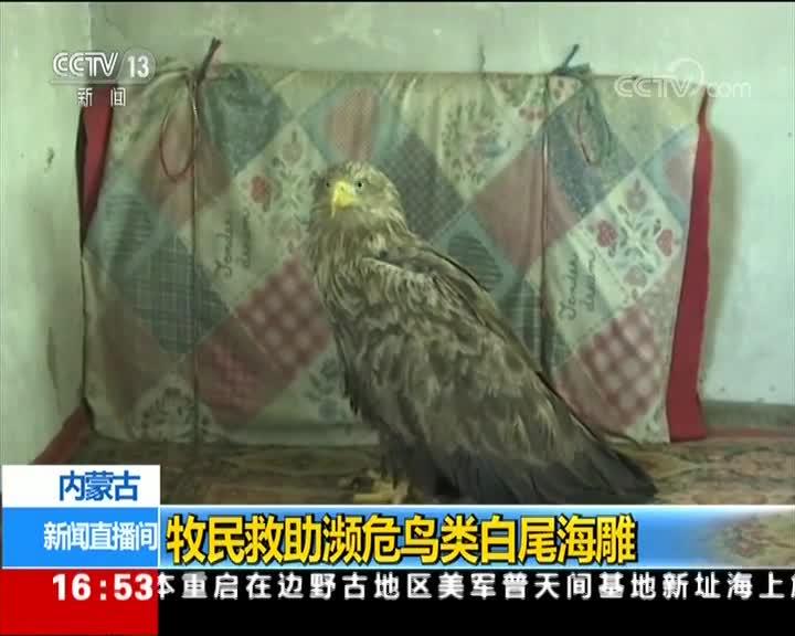 [视频]内蒙古 牧民救助濒危鸟类白尾海雕