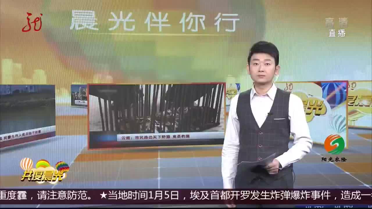 [视频]云南:市民路边买下野猫 竟是豹猫