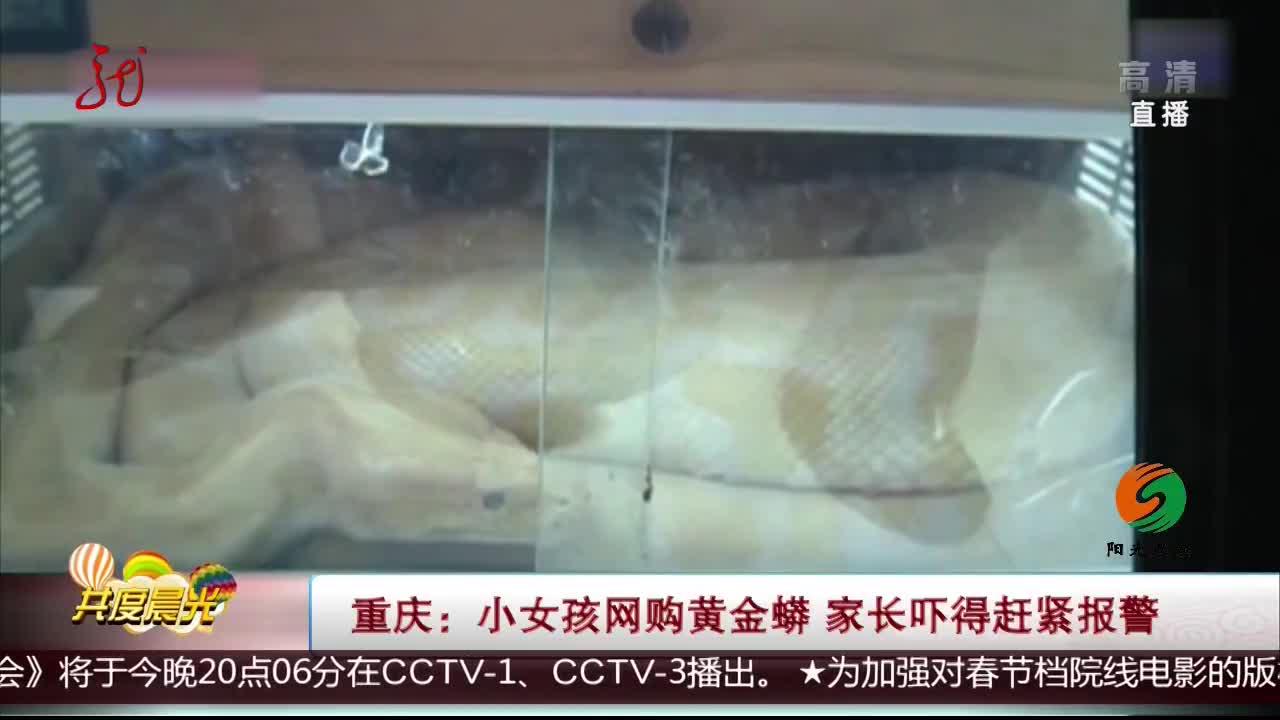 [视频]重庆:小女孩网购黄金蟒 家长吓得赶紧报警