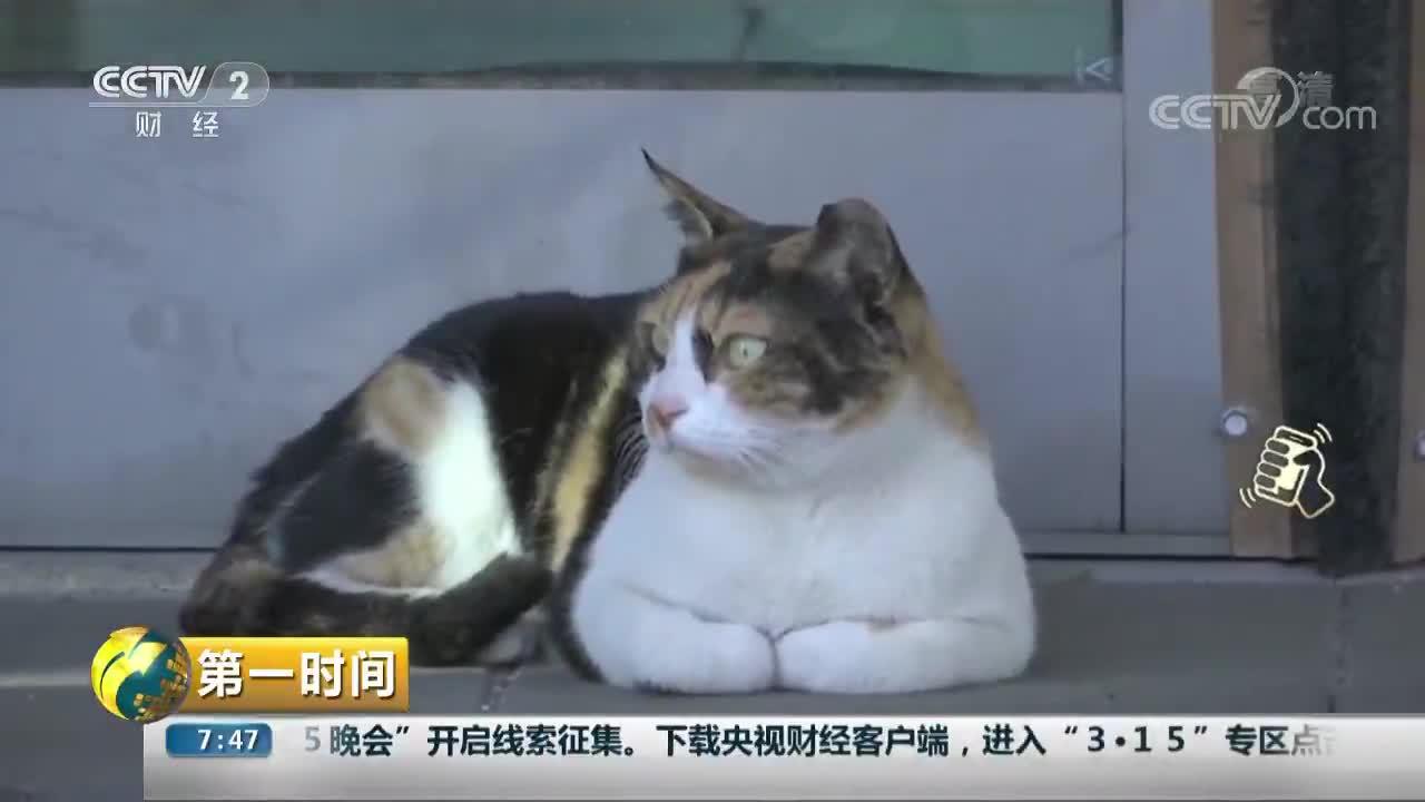 """[视频]以色列:车站""""淡定猫""""走红网络"""