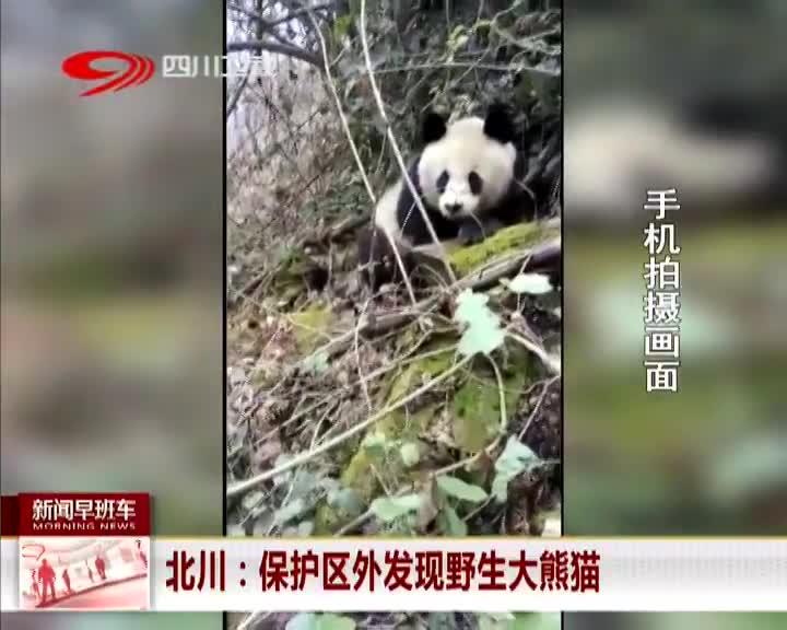 [视频]北川:保护区外发现野生大熊猫