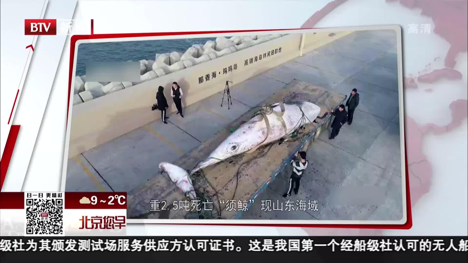 """[视频]重2.5吨死亡 """"须鲸""""现山东海域"""
