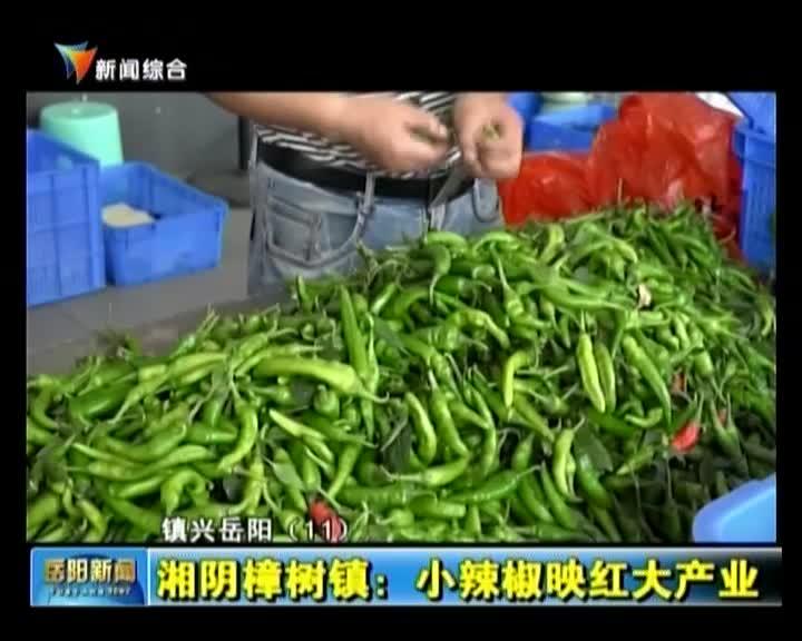 镇兴岳阳·湘阴樟树镇:小辣椒映红大产业