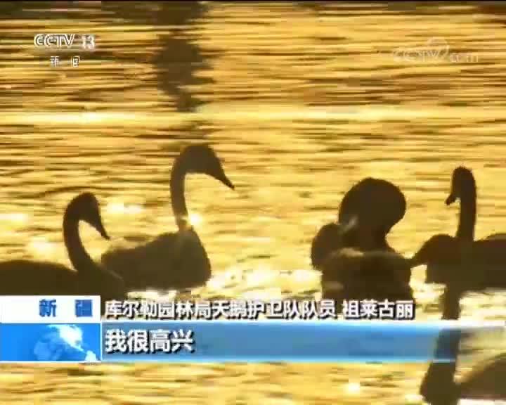 [视频]新疆 库尔勒:天鹅恋上这座城