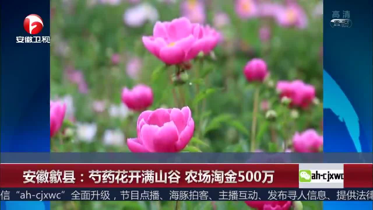 [视频]芍药花开满山谷 农场淘金500万