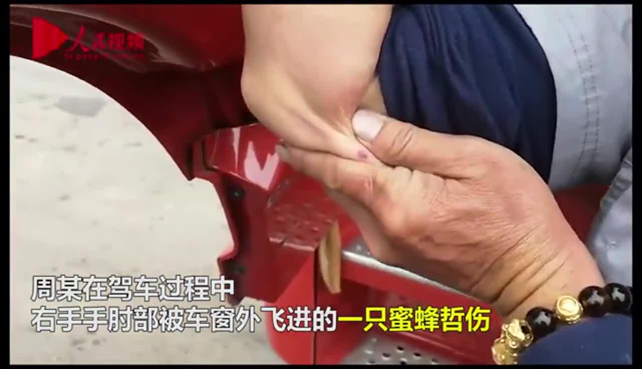 [视频]险!司机高速行驶途中被蜜蜂叮咬 失去知觉险有生命危险