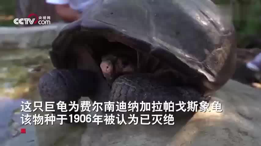[视频]偏远海岛发现极度濒危巨龟 曾消失110年被疑灭绝