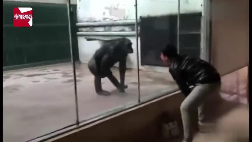 [视频]奇葩游客进动物园 绝对是来认亲的