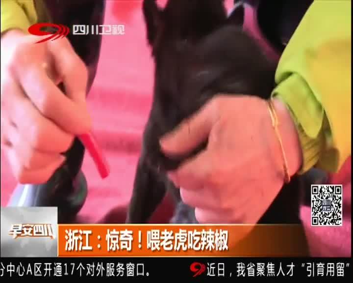[视频]浙江:惊奇!喂老虎吃辣椒