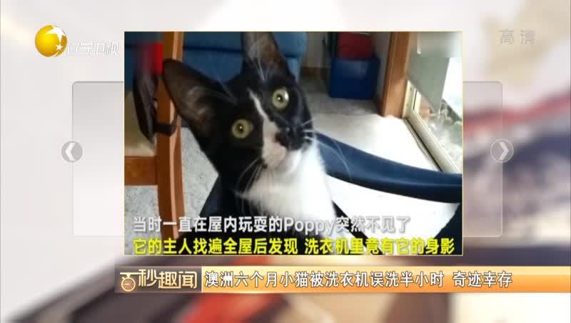 [视频]六个月小猫被洗衣机误洗半小时 奇迹幸存