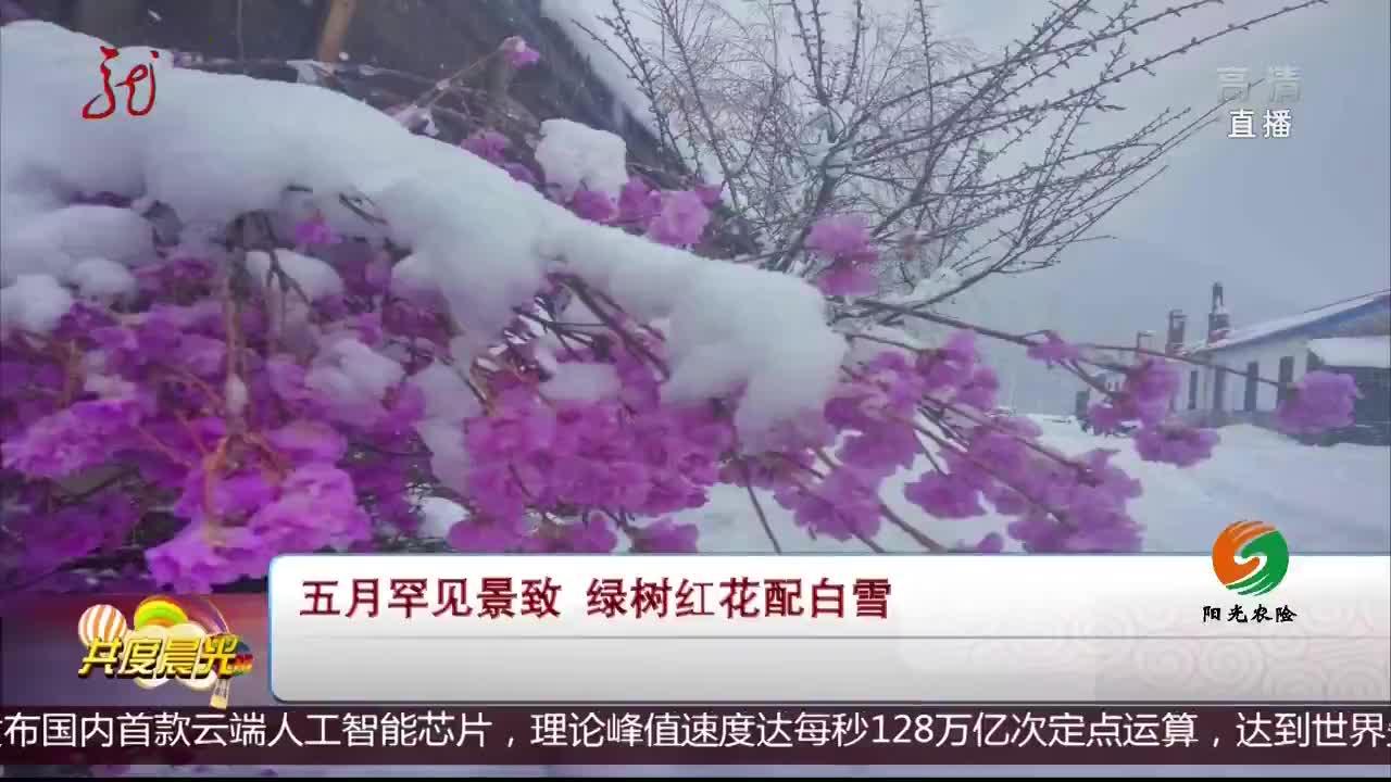 [视频]五月罕见景致 绿树红花配白雪