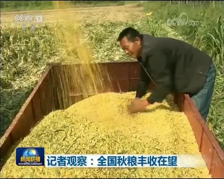 [视频]记者观察:全国秋粮丰收在望