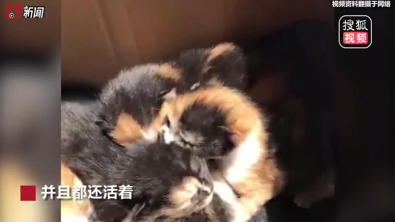 """[视频]发动机舱当""""产房""""!大连一猫妈妈在私家车里生了6只小猫"""