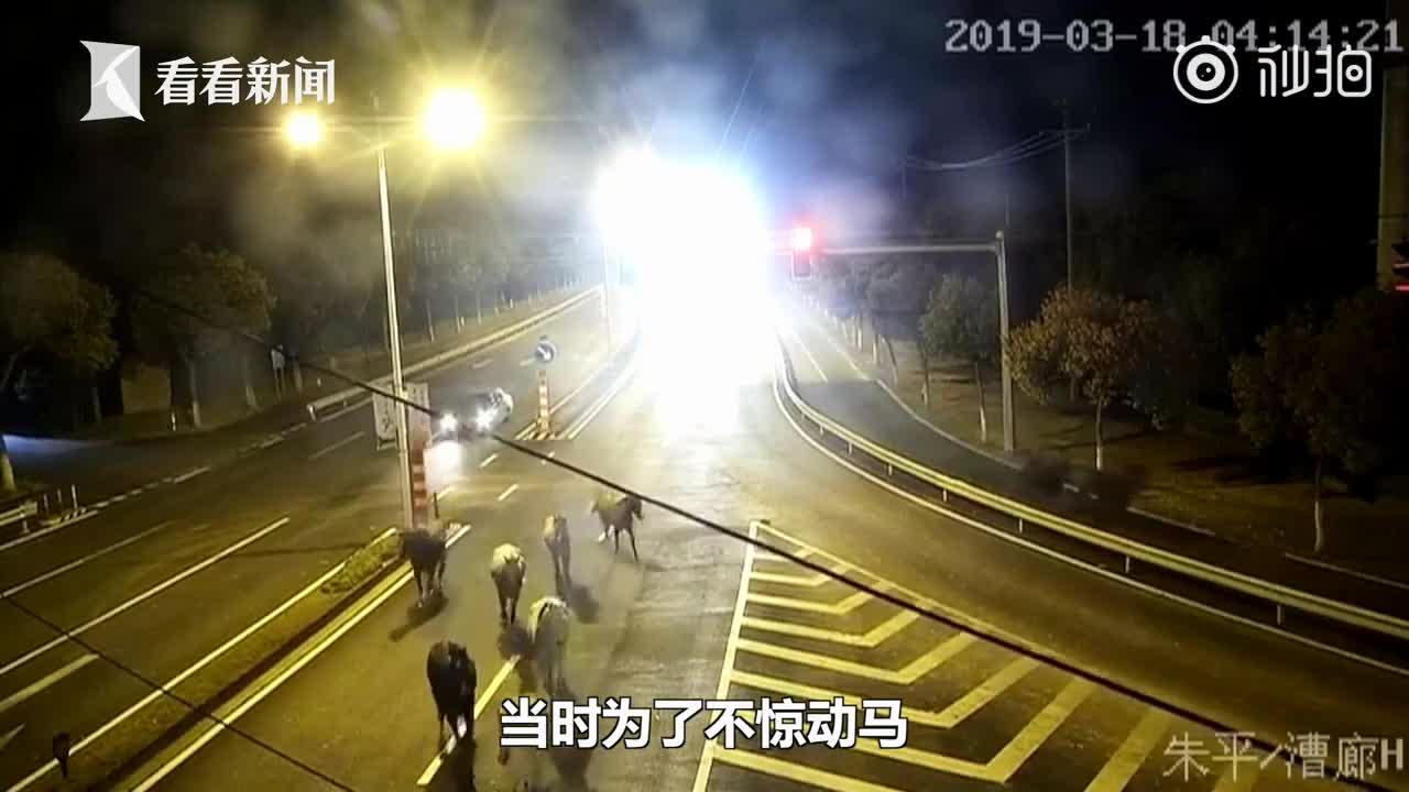 """[视频]九匹名贵赛马集体""""出逃"""" 凌晨马路上逆行撒欢"""
