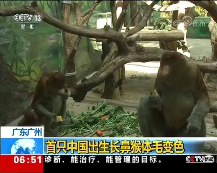 [视频]广东广州 首只中国出生长鼻猴体毛变色