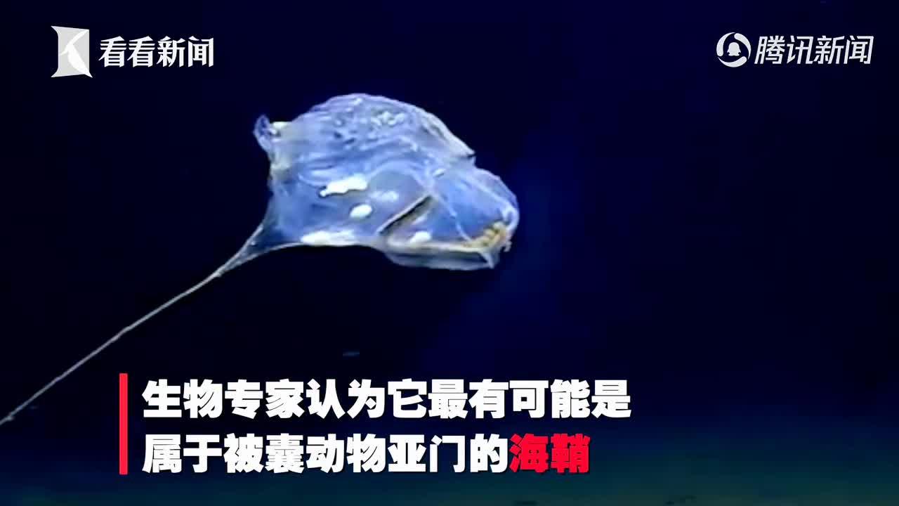 [视频]科学家在印度洋7千米发现怪物 形似伞兵还发蓝光