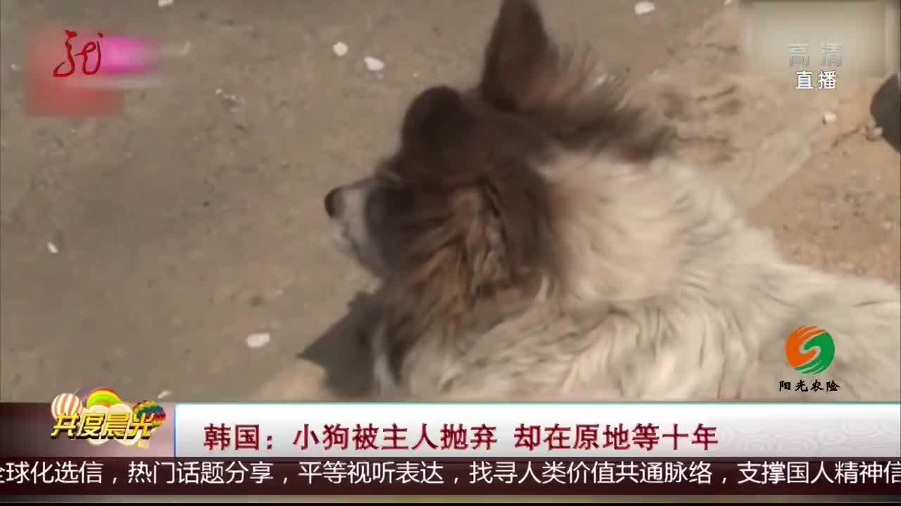 [视频]韩国:小狗被主人抛弃 却在原地等十年