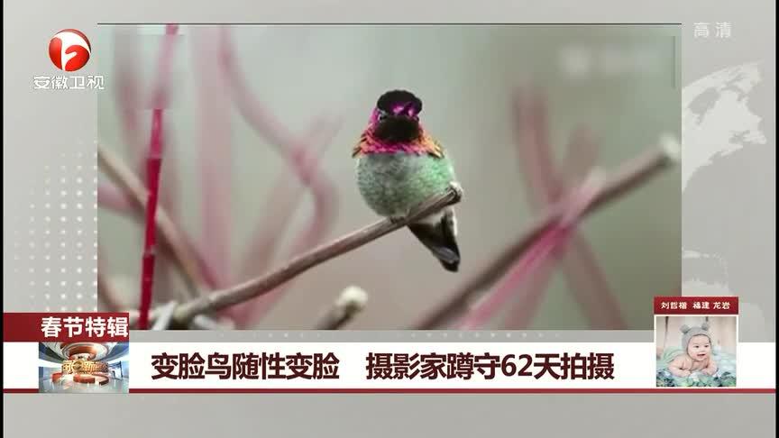 """[视频]会""""变脸""""的小鸟 摄影师蹲守62天拍摄"""