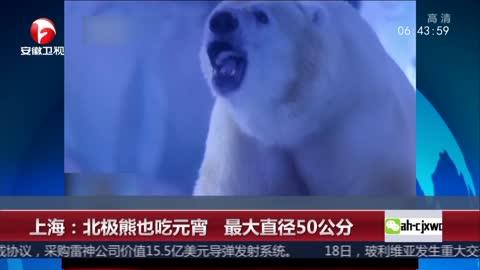 [视频]上海:北极熊也吃元宵 最大直径50公分