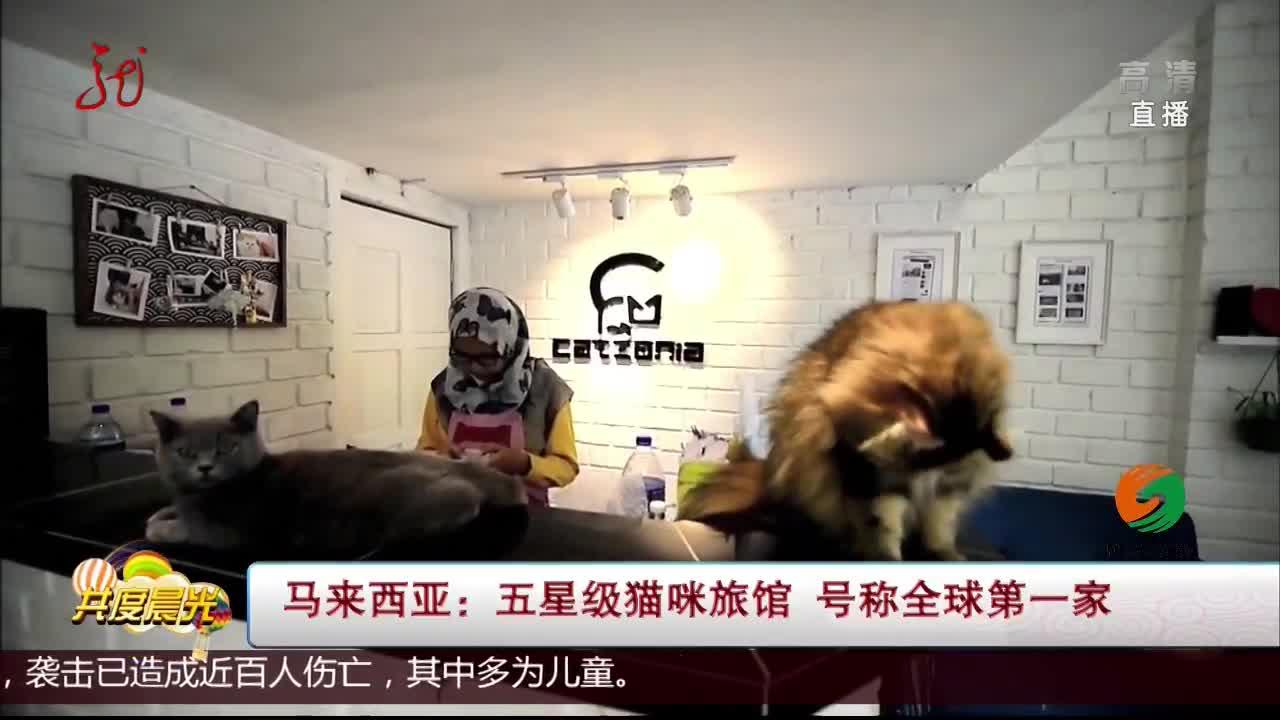 [视频]马来西亚:五星级猫咪旅馆 号称全球第一家