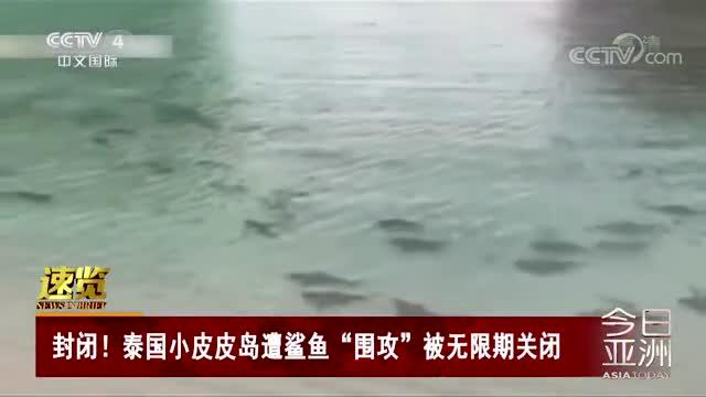 """[视频]封闭!泰国小皮皮岛遭鲨鱼""""围攻""""被无限期关闭"""