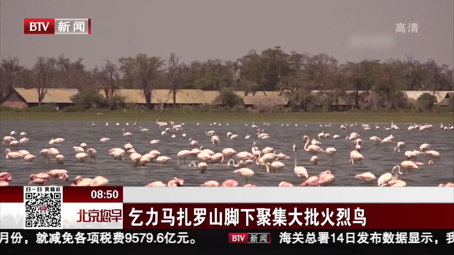 [视频]乞力马扎罗山脚下聚集大批火烈鸟