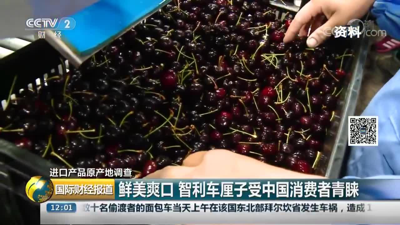 [视频]鲜美爽口 智利车厘子受中国消费者青睐