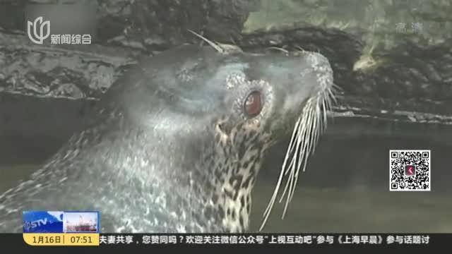 [视频]山东济南:趵突泉淡水养海豹引质疑
