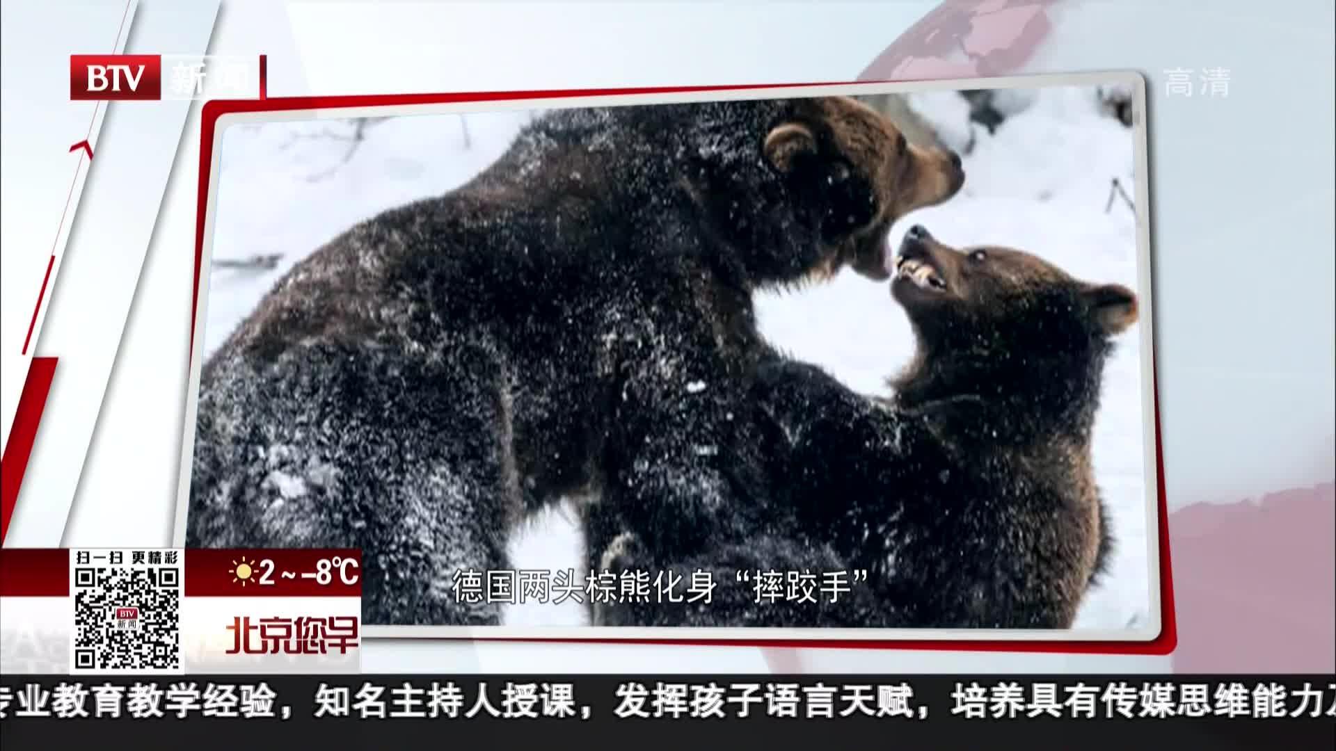 """[视频]德国两头棕熊化身""""摔跤手"""""""