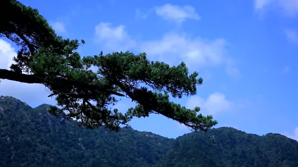 绿色宝库:莽山国家森林公园