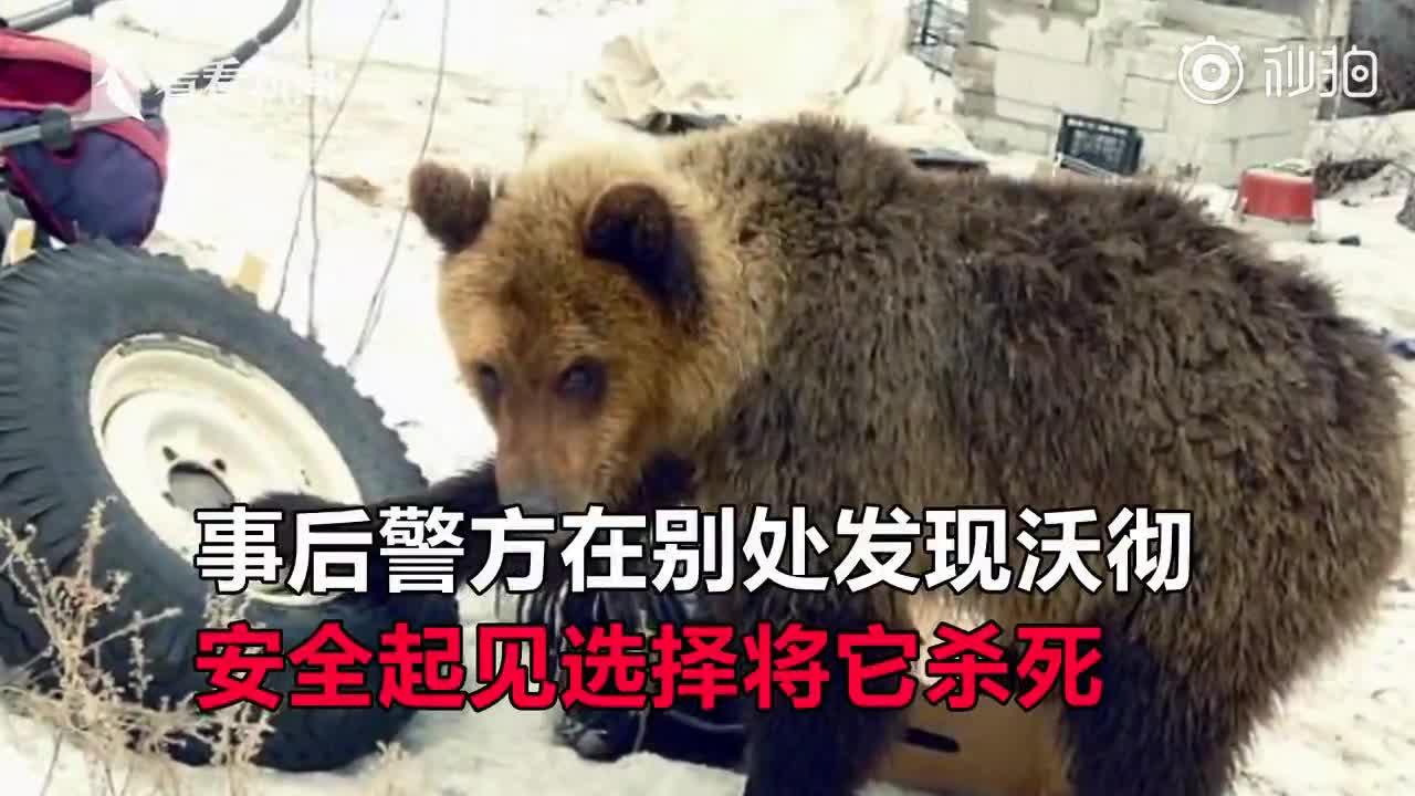 """[视频]俄版""""东郭先生""""救下小熊当宠物养4年 惨被啃到只剩白骨"""