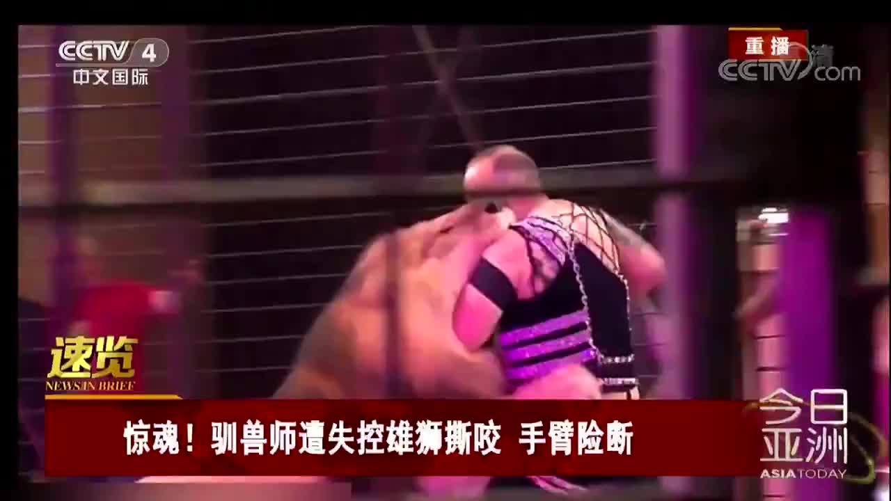 [视频]惊魂!驯兽师遭失控雄狮撕咬 手臂险断
