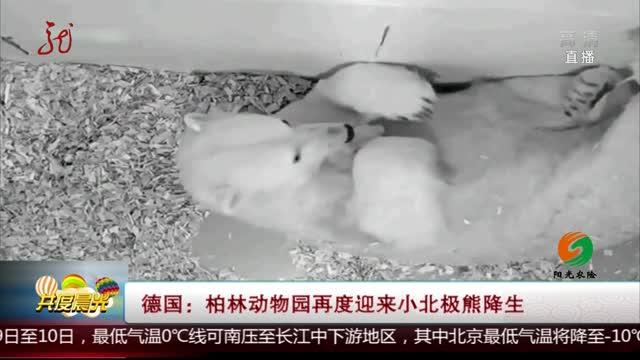 [视频]德国:柏林动物园再度迎来小北极熊降生
