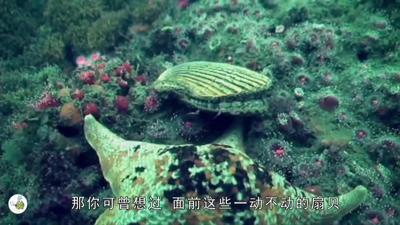 [视频]原来你是这样的扇贝 水里疯跑太魔性