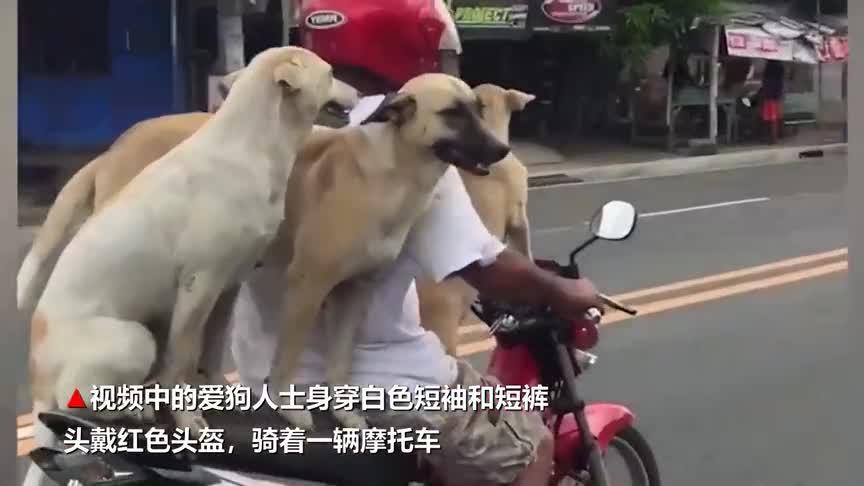 [视频]萌翻!三只汪星人坐主人摩托车淡定兜风