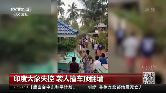 [视频]印度大象失控 袭人撞车顶翻墙