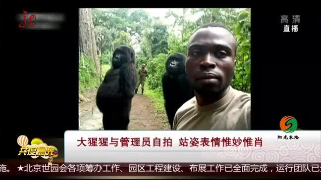 [视频]大猩猩与管理员自拍 站姿表情惟妙惟肖