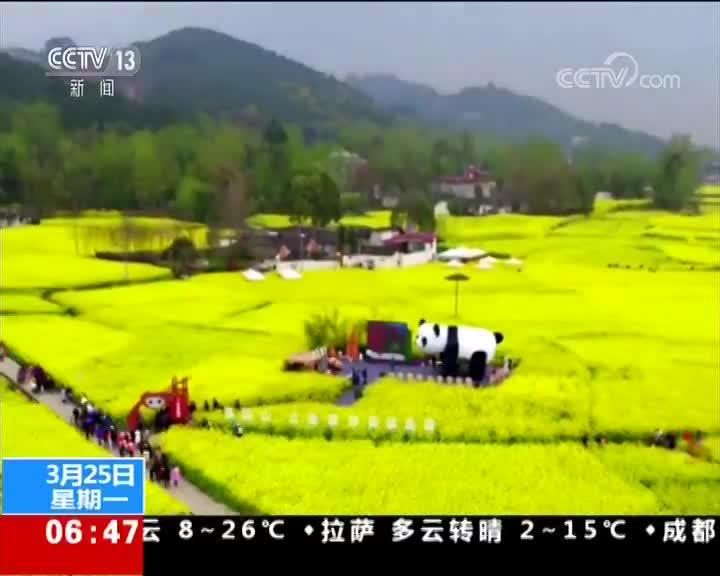 [视频]四川成都:油菜花开 花海休闲惹人羡